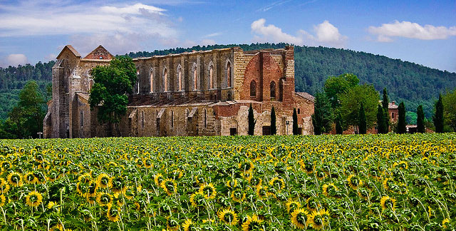 san galgano sunflowers